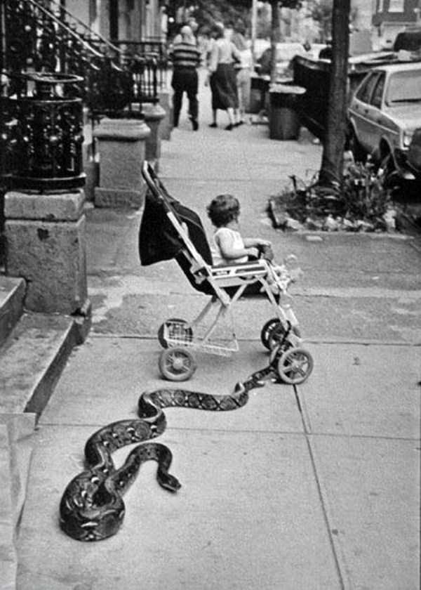 strange-vintage-photos (24)