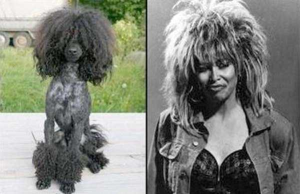 celebs-dog-look-alikes (1)