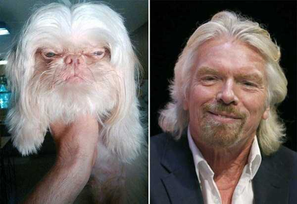 celebs-dog-look-alikes (10)