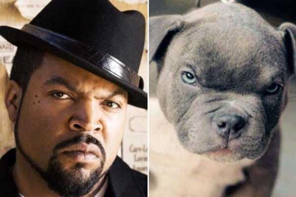 celebs-dog-look-alikes (11)