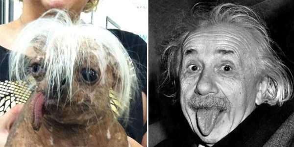 celebs-dog-look-alikes (12)