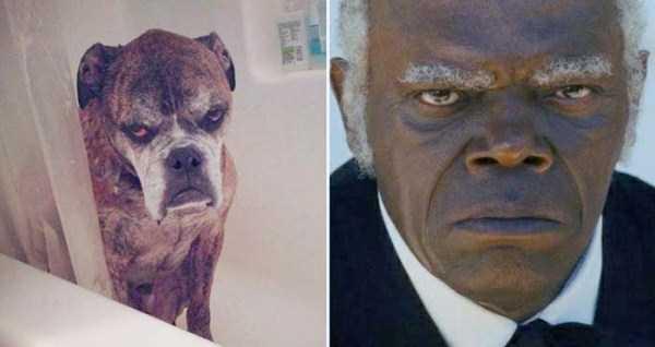 celebs-dog-look-alikes (13)