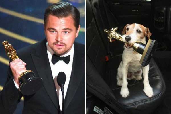 celebs-dog-look-alikes (15)