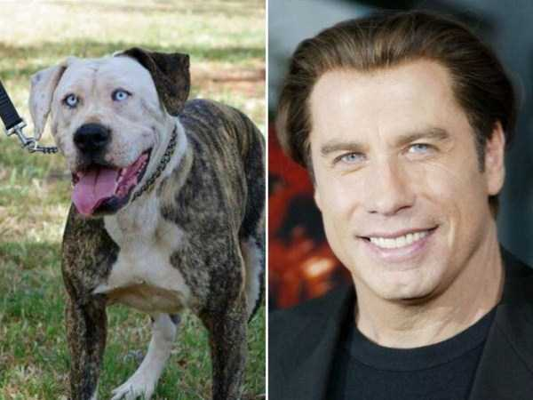 celebs-dog-look-alikes (16)