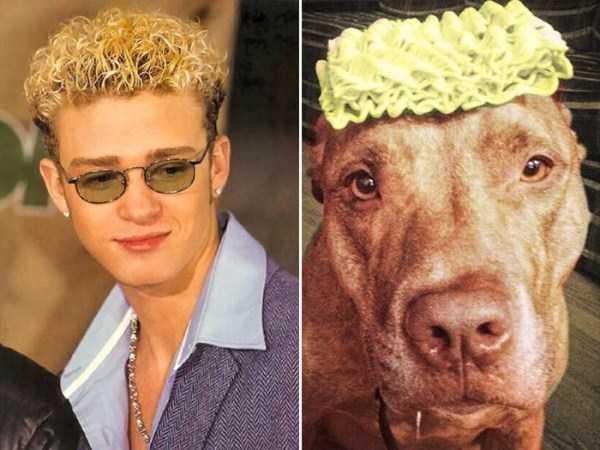 celebs-dog-look-alikes (18)