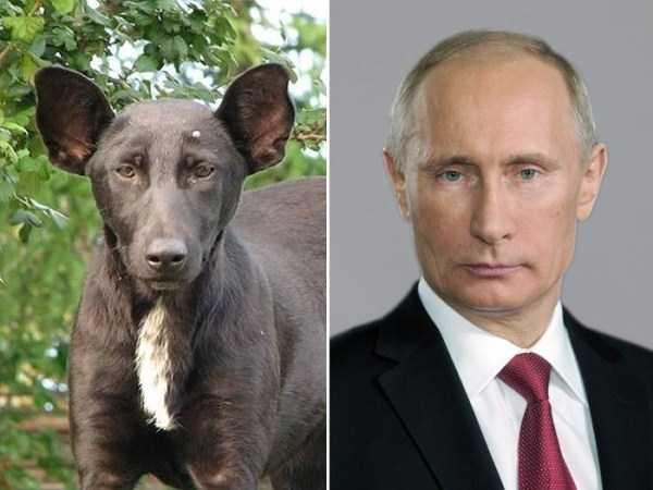 celebs-dog-look-alikes (19)