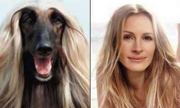 celebs-dog-look-alikes (2)