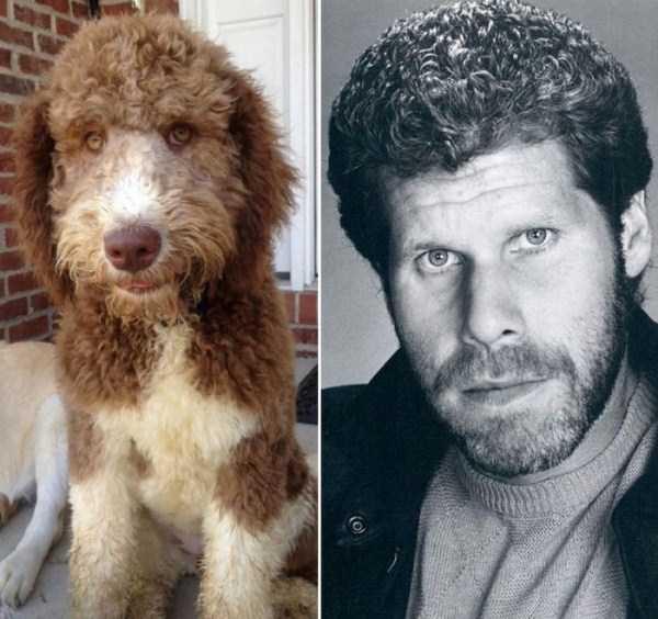 celebs-dog-look-alikes (20)