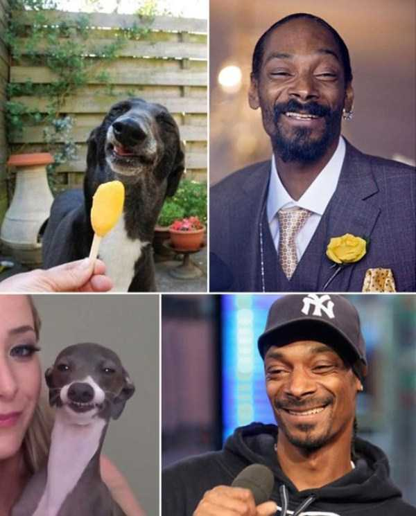 celebs-dog-look-alikes (21)