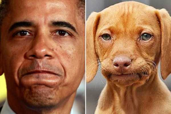 celebs-dog-look-alikes (22)