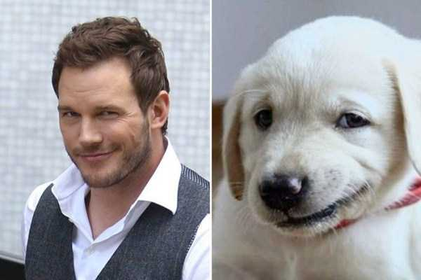 celebs-dog-look-alikes (24)