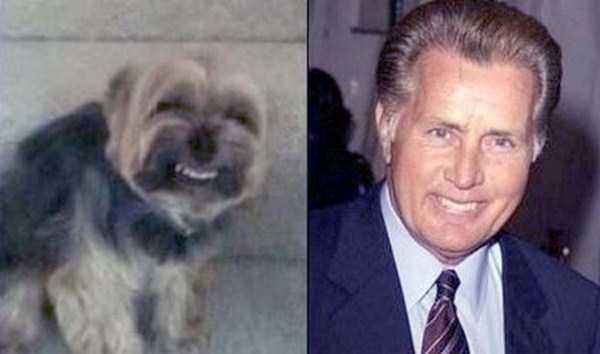 celebs-dog-look-alikes (3)