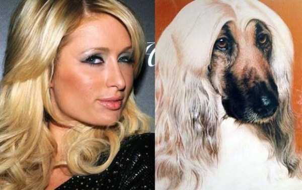 celebs-dog-look-alikes (7)
