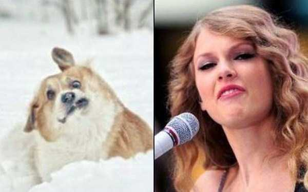 celebs-dog-look-alikes (8)