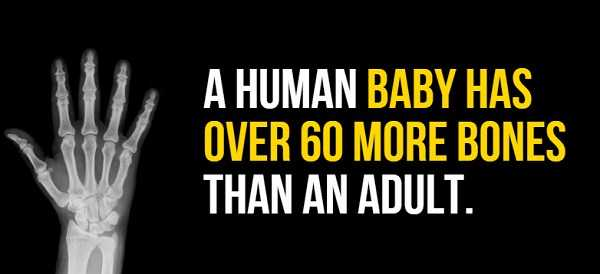 facts-about-human-body (3)