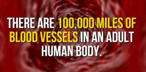 facts-about-human-body (4)