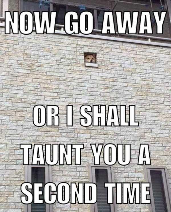 hilarious-memes-36