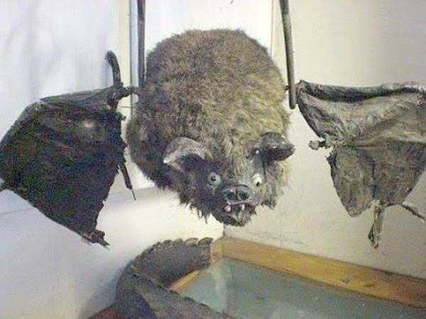 the-worst-taxidermy-fails-12