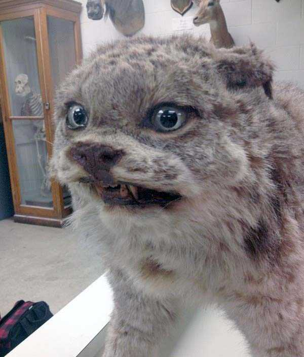 the-worst-taxidermy-fails-16