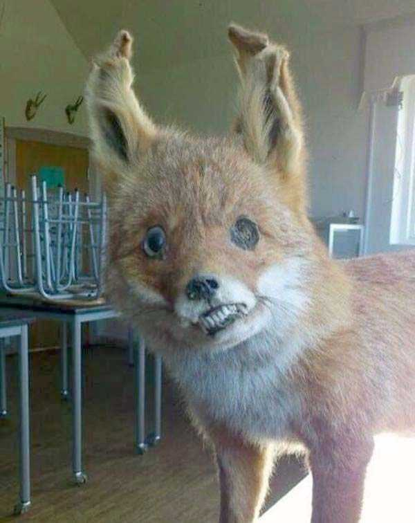 the-worst-taxidermy-fails-17