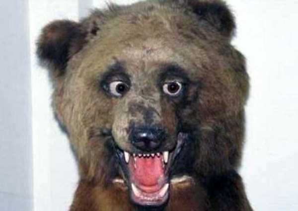 the-worst-taxidermy-fails-19