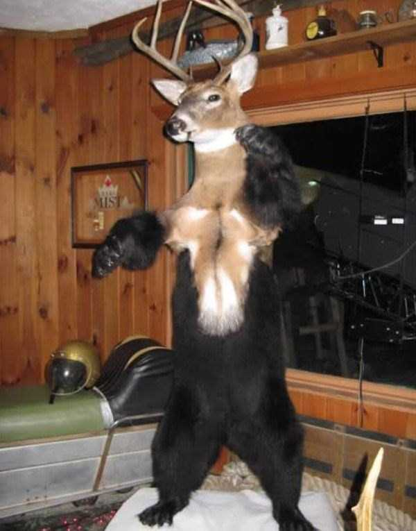 the-worst-taxidermy-fails-2