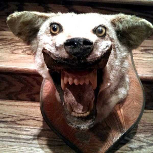 the-worst-taxidermy-fails-22