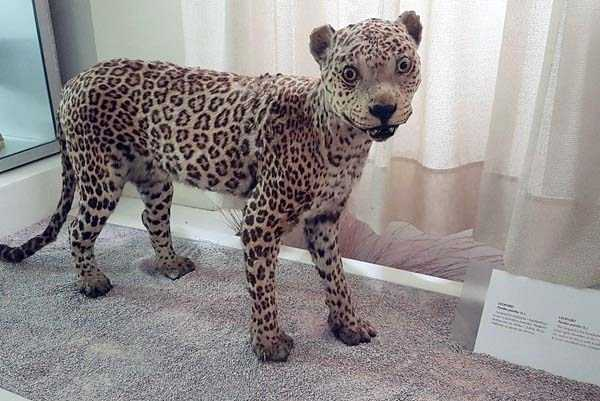the-worst-taxidermy-fails-24
