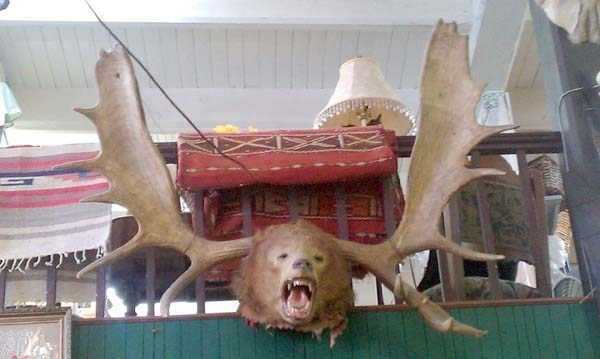 the-worst-taxidermy-fails-27