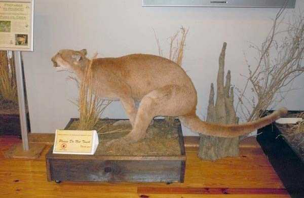 the-worst-taxidermy-fails-29