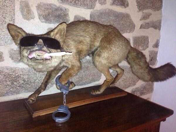 the-worst-taxidermy-fails-32