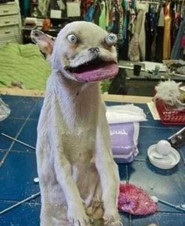 the-worst-taxidermy-fails-34