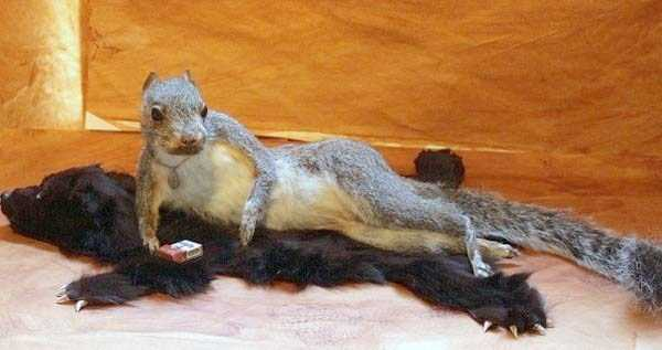 the-worst-taxidermy-fails-35