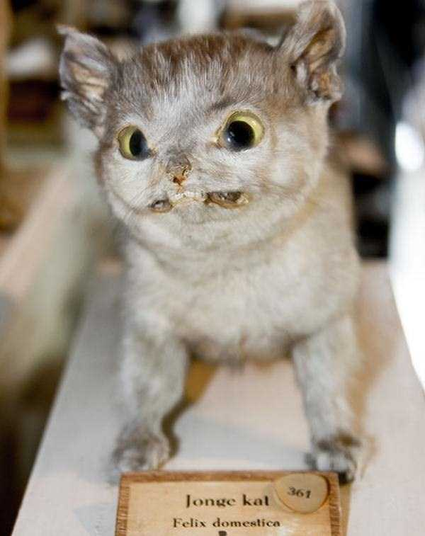 the-worst-taxidermy-fails-36