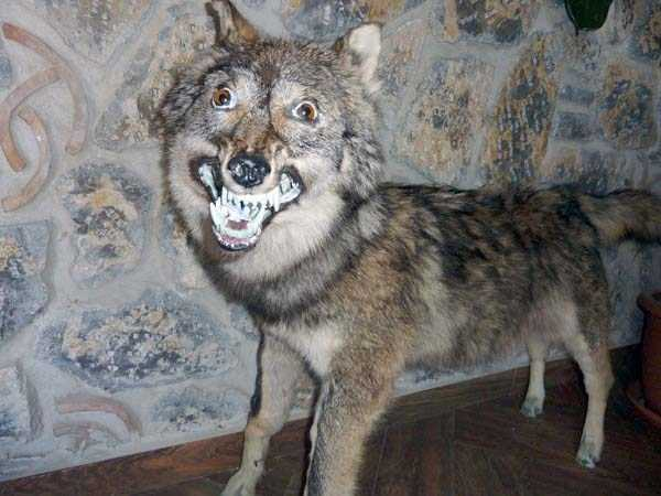 the-worst-taxidermy-fails-37