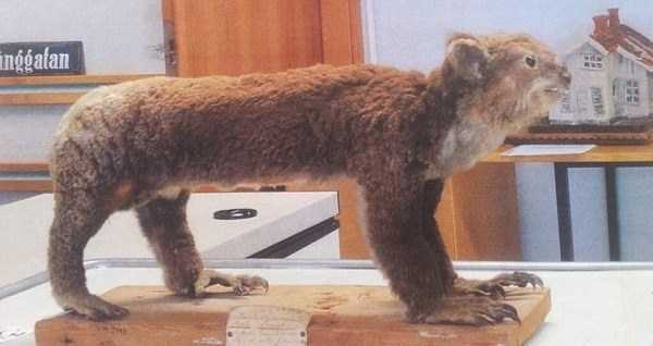the-worst-taxidermy-fails-38