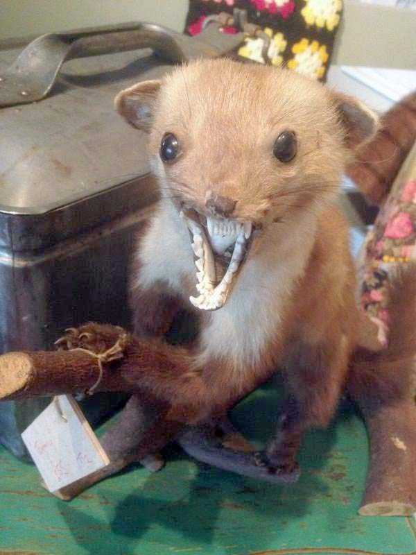 the-worst-taxidermy-fails-41