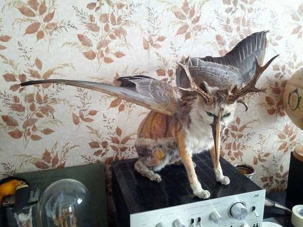 the-worst-taxidermy-fails-42