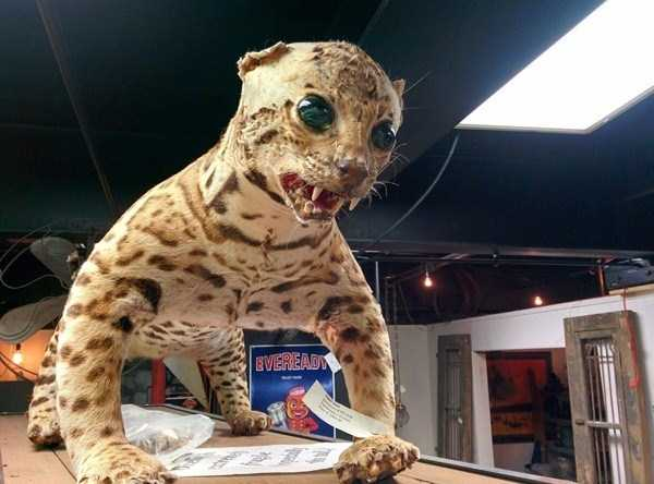 the-worst-taxidermy-fails-5