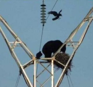 Crazy and Unusual Sights You Don't See Every Day (57 photos)