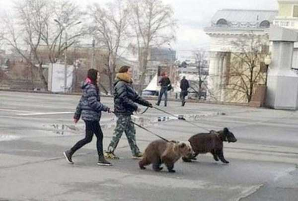 wtf-funny-russia-photos-36