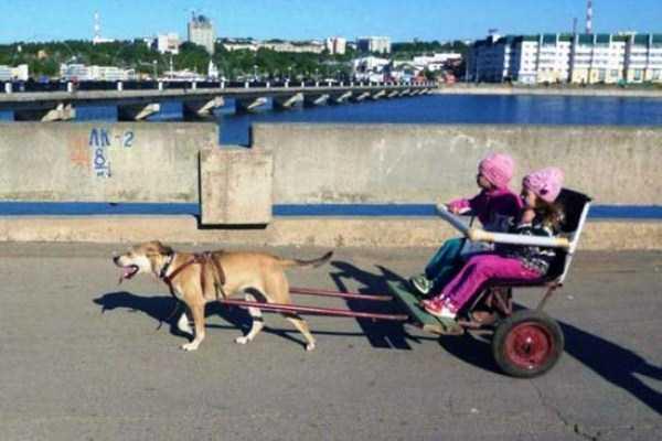 wtf-funny-russia-photos-5