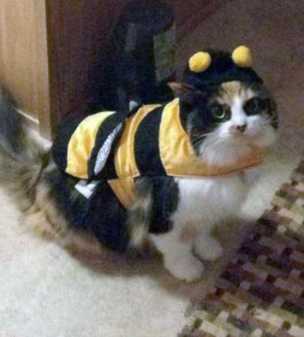 cats-halloween-costumes-1