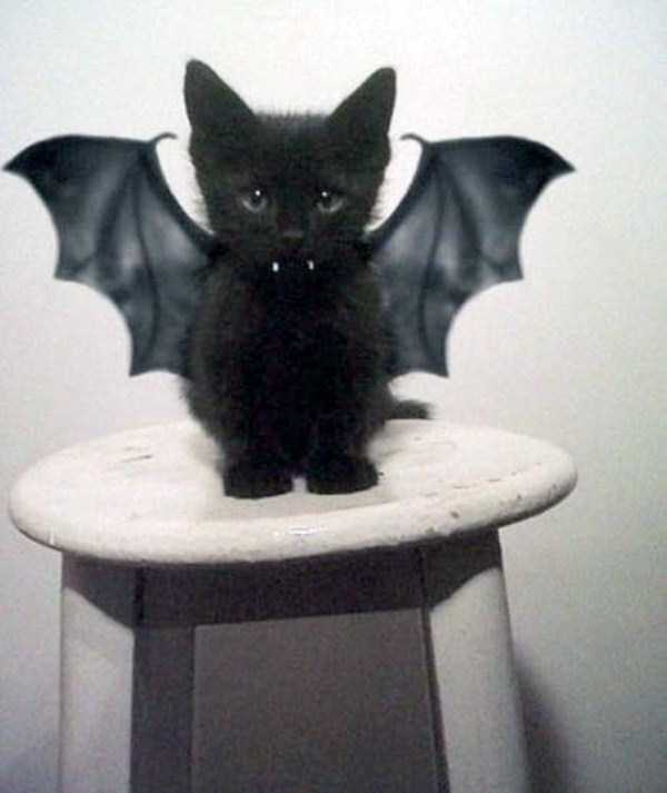 cats-halloween-costumes-10
