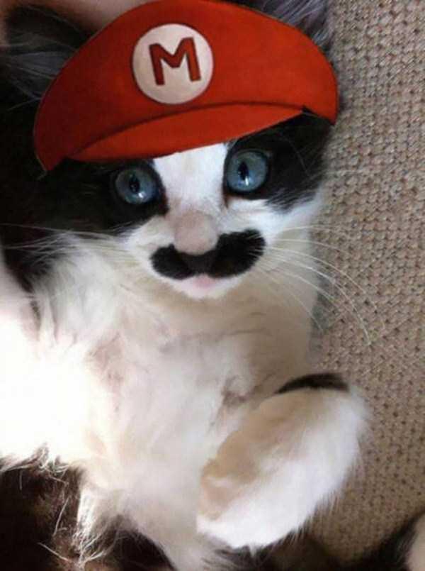 cats-halloween-costumes-12