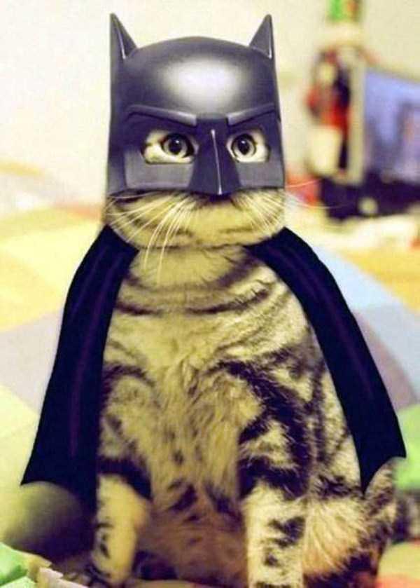 cats-halloween-costumes-13