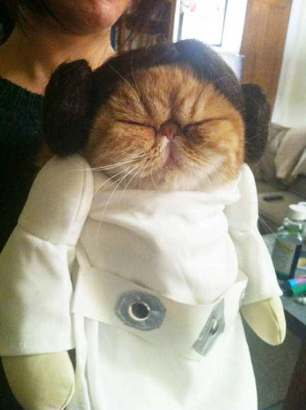 cats-halloween-costumes-14