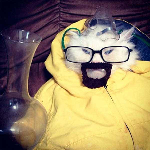 cats-halloween-costumes-15
