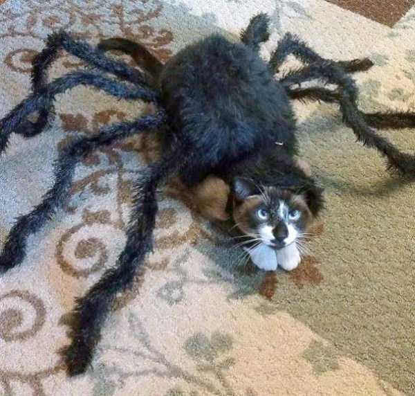 cats-halloween-costumes-16