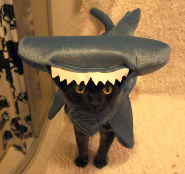 cats-halloween-costumes-18